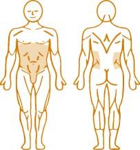 Мышцы, нагружаемые пневматическим тренажером для спины Abdominal Enraf Nonius