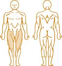 Мышцы, нагружаемые при работе на пневматическом тренажере Abduction Enraf Nonius