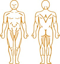 Мышцы, нагружаемые при работе на пневматическом тренажере Adduction Dips Enraf Nonius