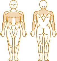 Мышцы, нагружаемые при работе на пневматическом тренажере Triceps Dips Enraf Nonius